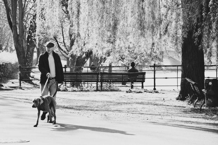 Man with dog walking on street