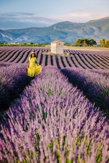 Scenic view of lavender amidst field against sky