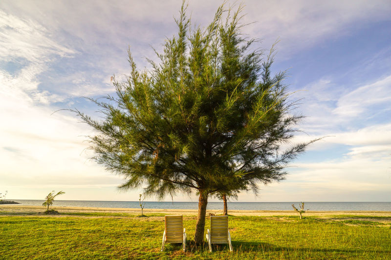Tree on grassy field by sea against sky