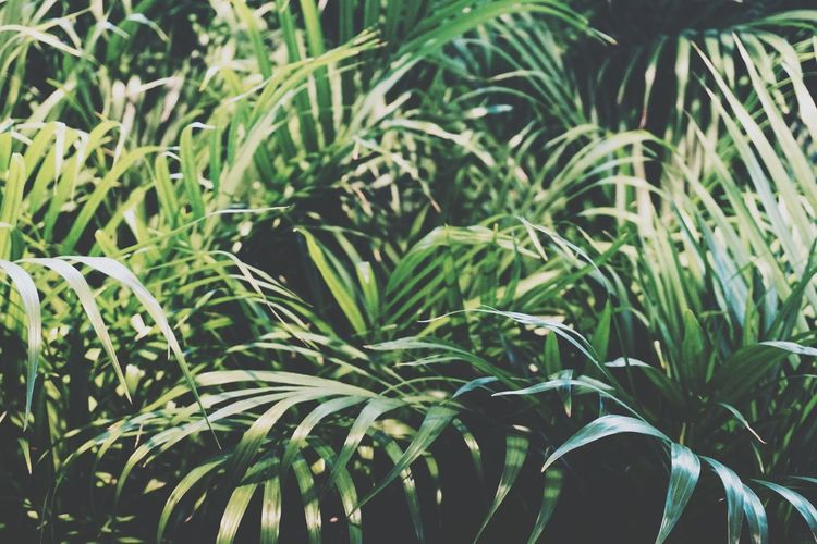 palm tree leaves Palm Palm Tree Palm Trees Palms Leaves Leaf Tree Nature Leaf Leafs Green Greenery