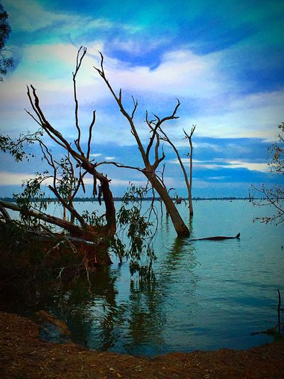The Great Outdoors - 2016 EyeEm Awards Amazingly Beautiful & so very peaceful Natural Beauty On My Door Step is the Stunning Lake Mulwala