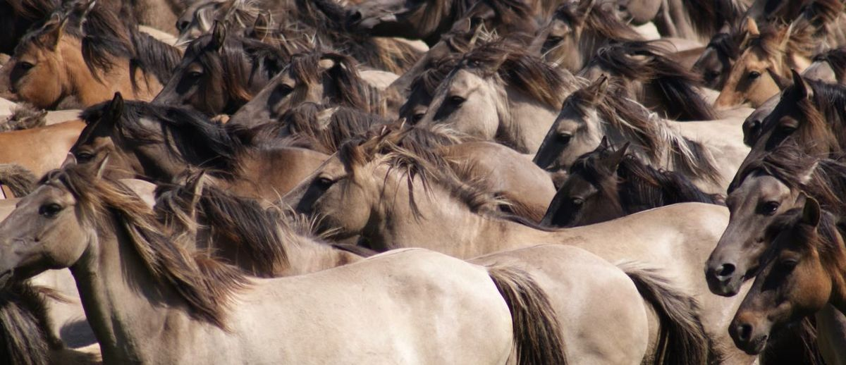 Full frame shot of horse herd