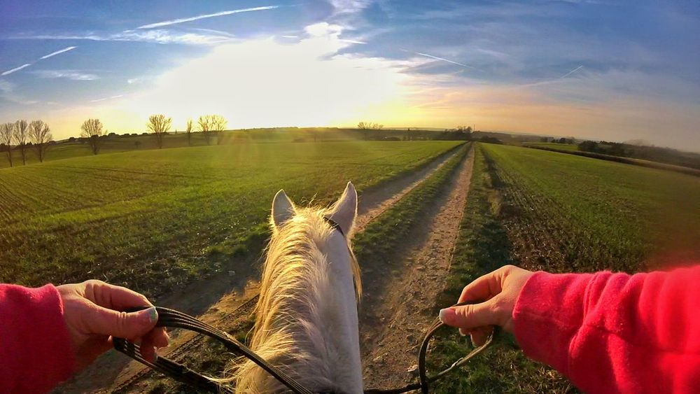 Horselove Horsesofinstagram Horse Horses Gopro Session Goprooftheday Goprohero4 Goprophotography Sunset Sunshine Sun Street Snapseed Cloud Girls Girl Clouds And Sky Cloudart EyEmNewHere