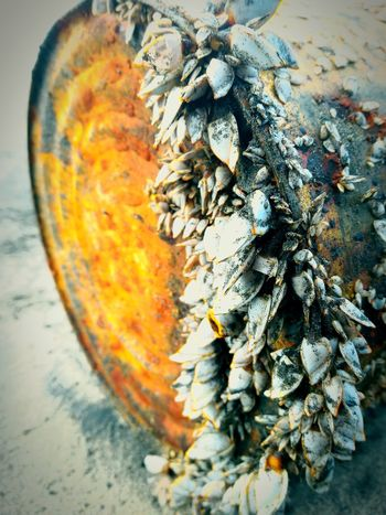 Shells painting the drum!!! Beauty In Nature Newtalent Licor 43 Passione_fotografica India Goa Experimenting... Travel Nature 43 Golden Moments Beautylieseverywhere Nature And Me Nature Beautyaroundme Nature's Diversities Beauty Lies Everywhere Beach Photography Sea And Rocks Sea And I Colour Of Life