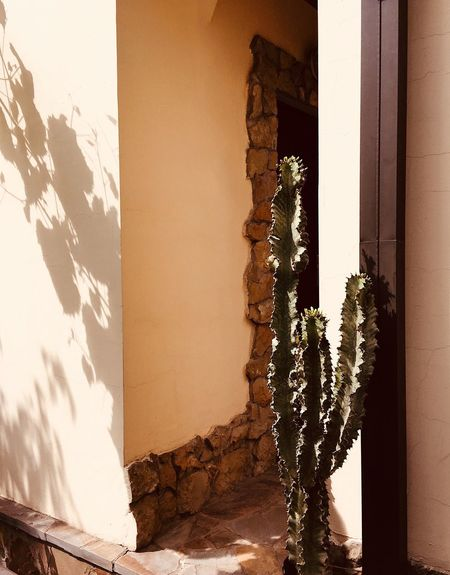 Sunny day Warm Light Gardening Cactus Flower Cactus Sunlight Architecture Built Structure Shadow Wall - Building Feature Day Nature Building No People Wall