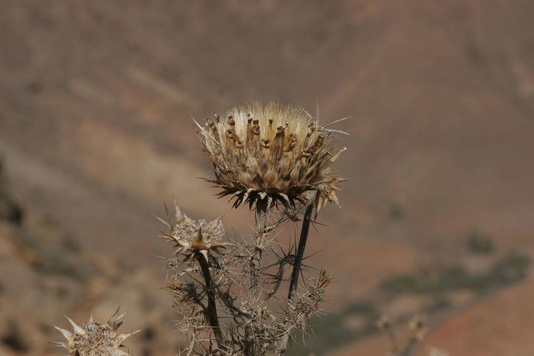 Dryness Desert