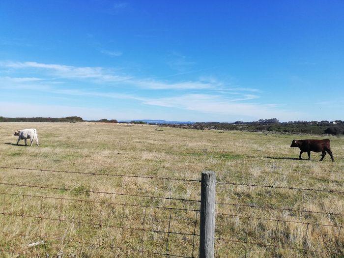 Grazing Rural