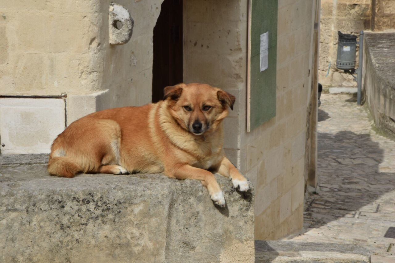 one animal, dog, animal themes, domestic animals, mammal, pets, looking at camera, built structure, portrait, architecture, no people, day, outdoors, relaxation, building exterior