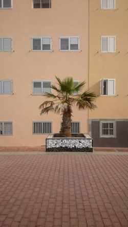 Building Exterior Tree Architecture No People Palm Tree Outdoors Urbanphotography Urban Landscape Urban Nature Las Palmas
