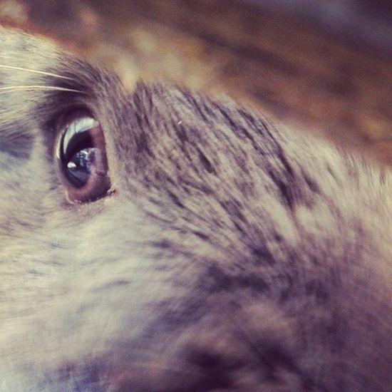 ✿◕‿◕✿ ❀◕❀Look into my eyeball! (●´ω`●) ✿◕✿ ❀❀ <3 Cute Rabbit 토끼