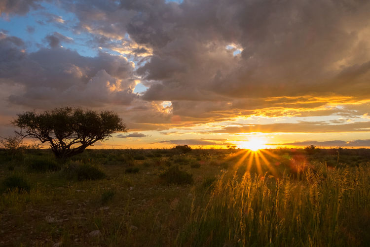 African Sunset African Tree Beauty In Nature Clouds Cloudscape Dramatic Sky Grass Landscape Namibia Nature No People Orange Color Outdoors Scenics Sun Sunlight Sunset Tranquility Tree