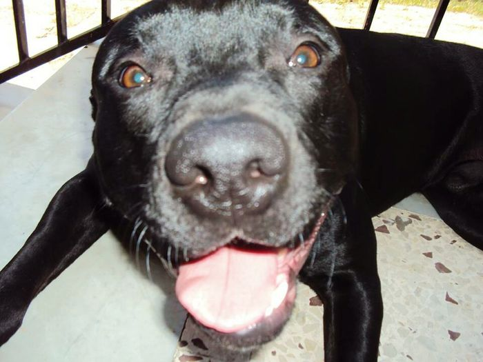 My Dog <3 Dog Love Dogslife First Eyeem Photo Summer Dogs