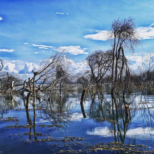 Bare trees in lake after flood