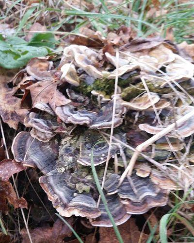 🍄🍄 Idaho Mushroom DontKnow Whatarethose Searching Shroom Shrooms Majestic Nature Naturehippys Naturelovers Nature_perfection Followme
