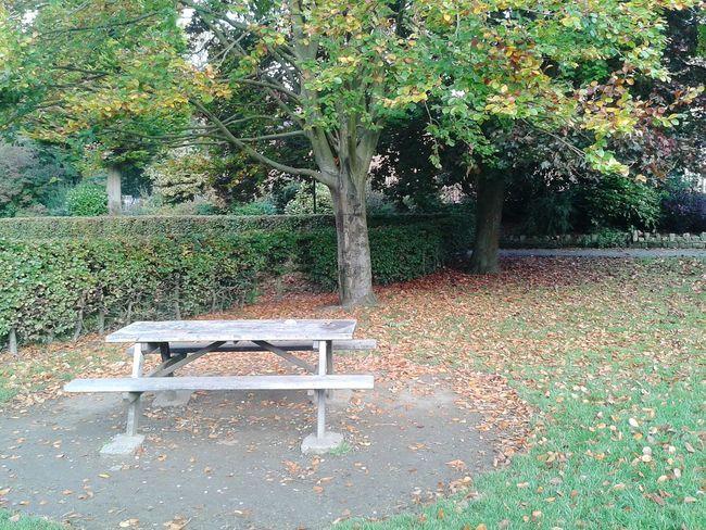 Autumnbeauty EyeEm TreePorn Autumn Autumn Leaves Fallbeauty NaturalBeauty Hebdenbridge Park Valley Walking Around