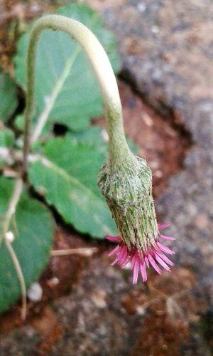 Flower Green Purple Purlpe Flower Leaves Flower Blooming Nature