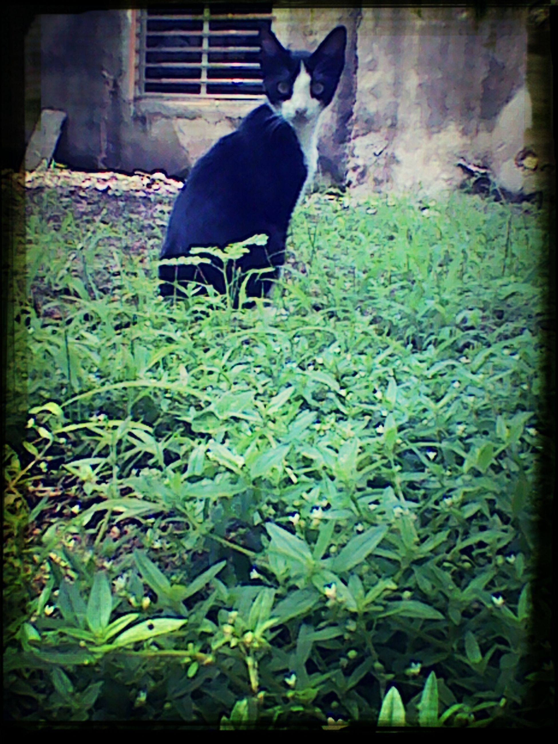 one animal, animal themes, pets, domestic animals, domestic cat, cat, mammal, transfer print, feline, plant, auto post production filter, front or back yard, leaf, green color, grass, growth, day, no people, outdoors, nature