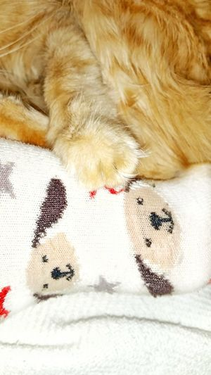 TK Maxx Socksie Human Body Part Foot Cat Asleep Lazy Cat Warm Clothing Soft Texture Cozy Multi Colored Cute Socks Dog Socks Indoors  Animal Texture Clothing Animal Themes Dogs Softness Cat Paw Cat Lovers Funny Socks Pattern Close-up Socks Its Me