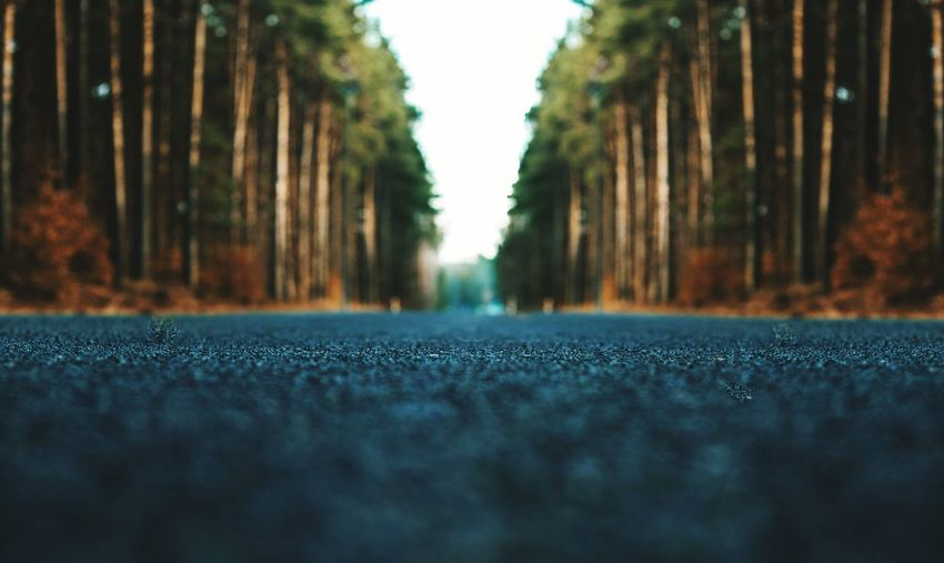 Road Forest Backgrounds Bokeh Photography Akcent Nature Way Beauty In Nature Great Phptography Travel Trip Photo Trip Car Nobody Tree Close-up Yellow Line Surface Level Leaves Fly Agaric Railway Track Long Ground Narrow Woods Lane Contrail Walkway Pathway