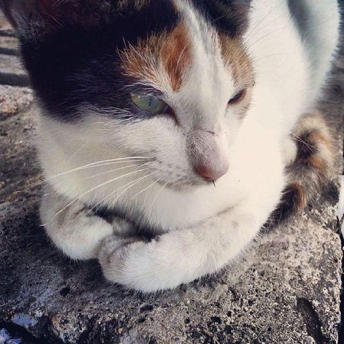 Universityofmauritius Kitten Cutenessoverload White brown black cateye nofilter s3