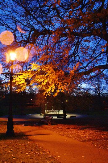 Autumn at dusk Autumn Band Stand Bare Tree Beauty In Nature Branch Illuminated Lighting Equipment Nature Orange Color Road Scenics Season  Street Light Sunset Sunset #sun #clouds #skylovers #sky #nature #beautifulinnature #naturalbeauty #photography #landscape Tranquil Scene Tranquility Tree