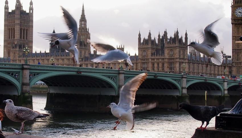 EyeEm Selects London Bridge Your Ticket To Europe