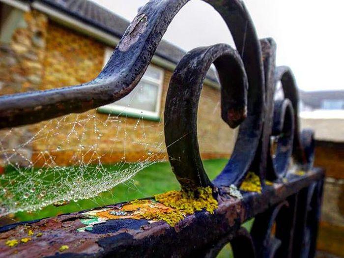 Rusty gate Rust Cobweb Freelandertoldmetoo @free_lander2
