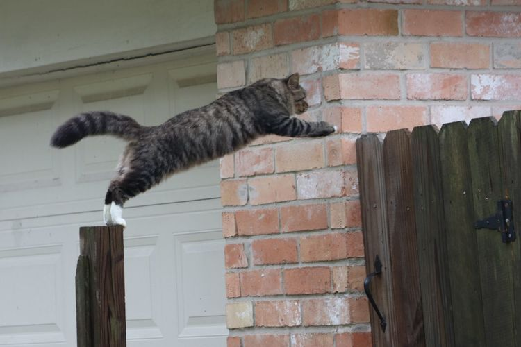 Jump, Whiskers!