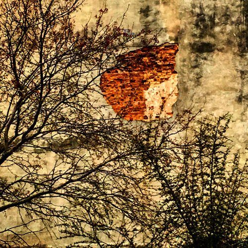 Abstraction Abstract Bare Tree Branch Building Exterior Low Angle View No People Orange Color Scenics Tranquil Scene Tranquility