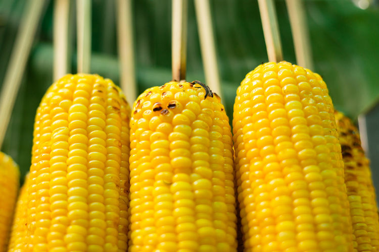 Close Up Of Fresh Sweet Corns