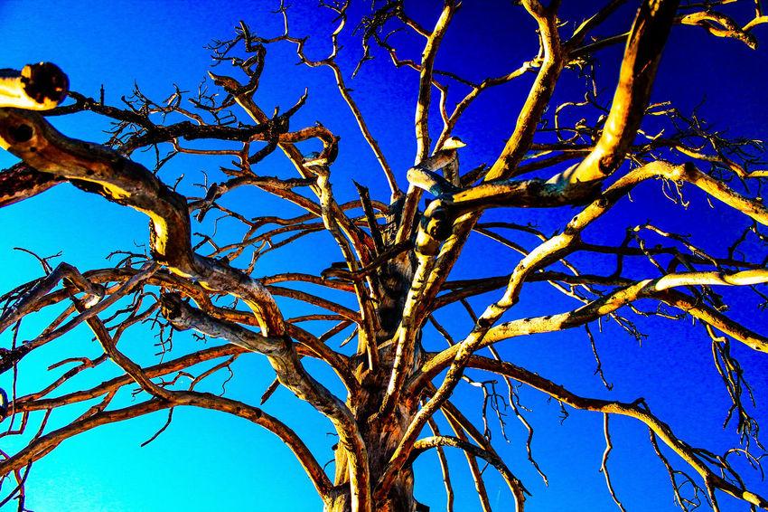 Diamond Mafia Photography Fine Art Photography Tree Tree BranchesLandscape Sky Desert Beauty Sharp Focus Vibrant Colors Lake Shastina C.a
