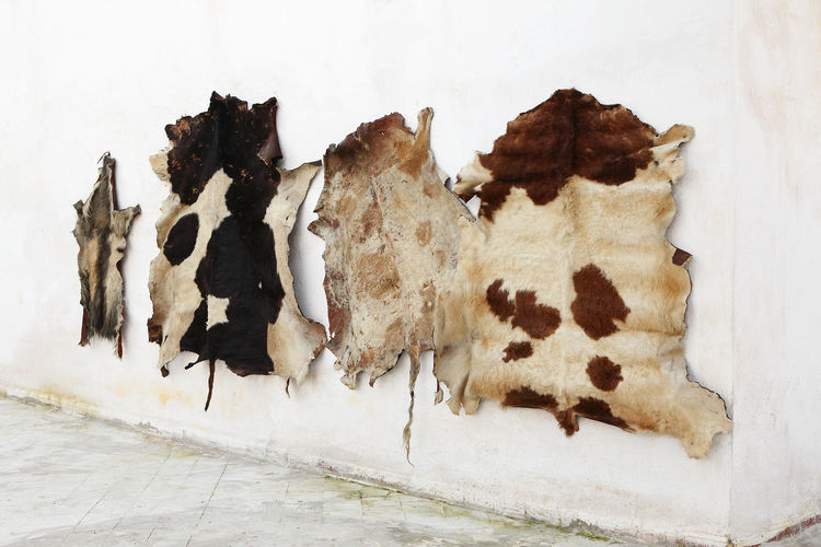 Close-up Day Dyeing Fes, Morocco Fracture Indoors  Leather Leather Craft No People Tannery Textured  Travel Travel Destinations Weathered White Background
