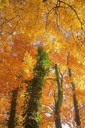 Golden Moments 43 Wood Wald Waldspaziergang Herbststimmung Herbst Herbst In Seinen Schönsten Farben Golden Moments  GERMANY🇩🇪DEUTSCHERLAND@