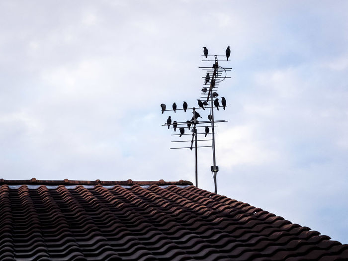 Low angle view of birds perching on antenna against sky