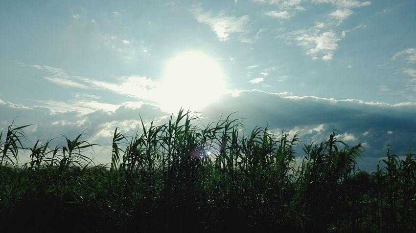 Tree Sunlight Silhouette Sky Cloud - Sky Plant