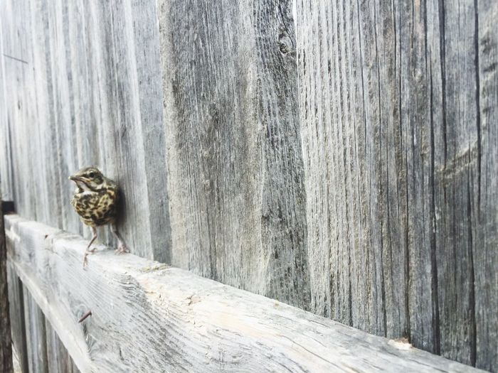 Animal Wildlife BabyRobin Home Place EyeEmNewHere
