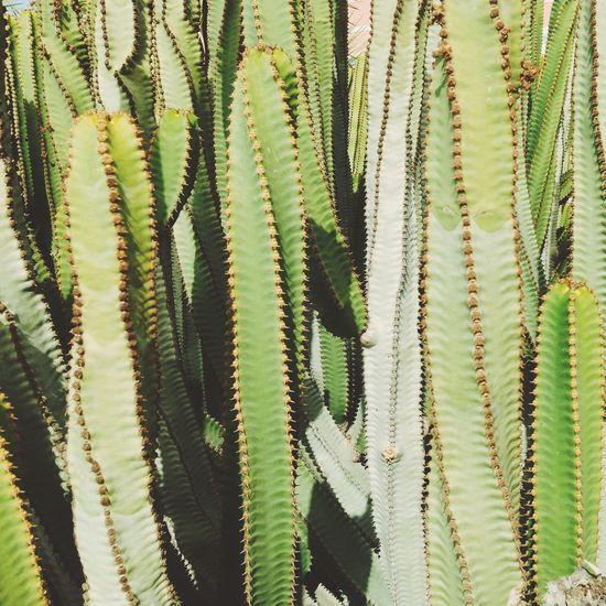 Green Flowers,Plants & Garden Botanical Garden Gardening Plants Cactus Cacti