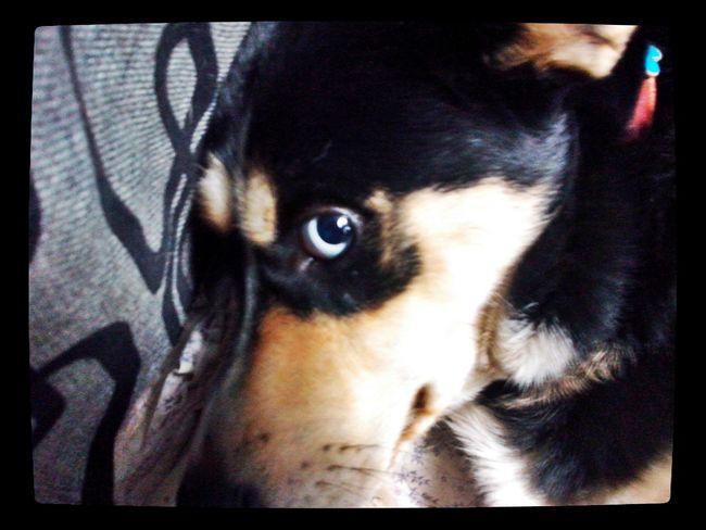 Puppy❤ Doglovers Cute Pets Ilovemydog con cara de sufrida xd <3