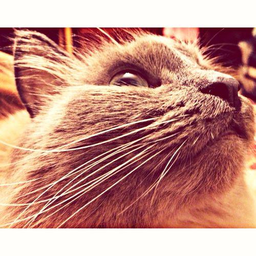 Люблю своего Коши???