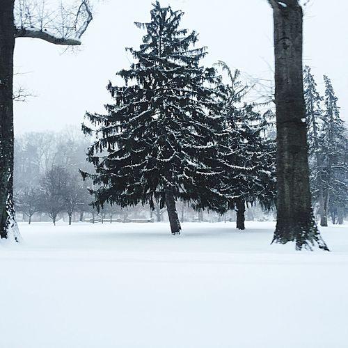Huntington, WV Huntingtonwv Ritter Park Winter Winter Wonderland Trees Hugging A Tree Treescollection Snow ❄