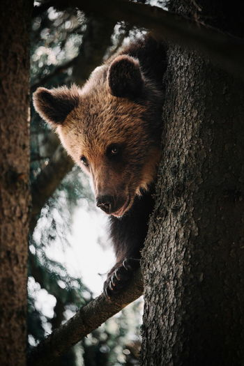 Close-up of bear on tree trunk
