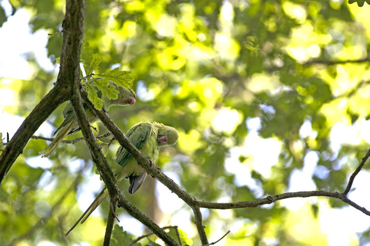 Low angle view of a bird on branch