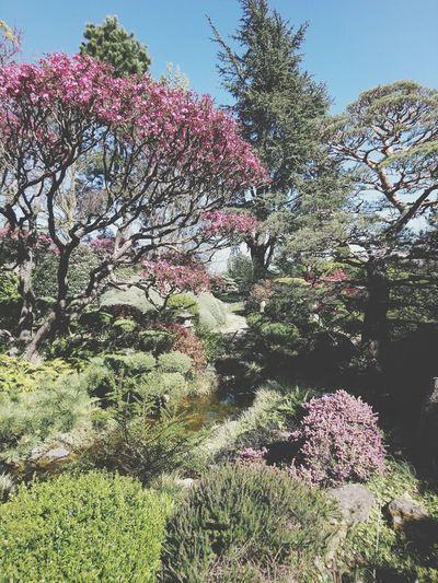 Jardin Zen Érik