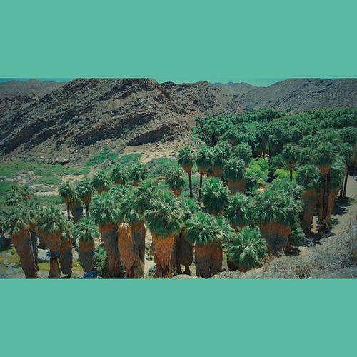Squareinstapic Vscocam Indiancanyons Palmsprings USA Photography Nature