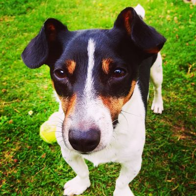 Buster Jackrussell