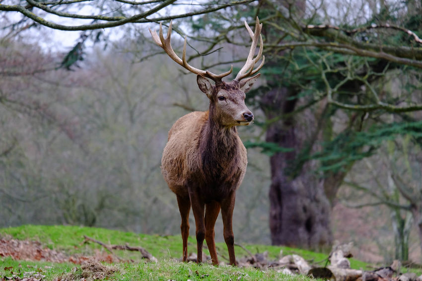 Animal Themes Animal Wildlife Animals In The Wild Antler Beauty In Nature Calm Day Deer Lake District Mammal National Park Nature No People One Animal Outdoors Sky Stag Tranquility Tree