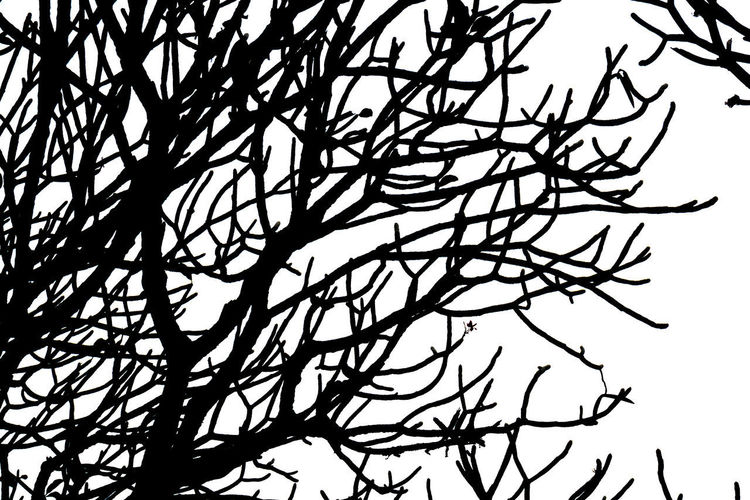 Tangled Complexity Day Studio Shot Low Angle View Sky Nature Close-up Silhouette Plant Pattern Branch No People Bare Tree Backgrounds Tree Shadow