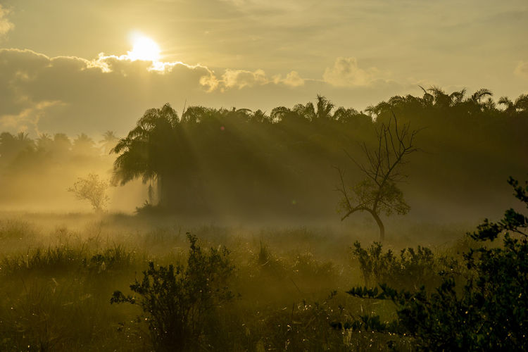 Fog over the grass In the morning Nature along the way in Chumphon Province Sky Plant Beauty In Nature Tree Tranquility Sunset Tranquil Scene Cloud - Sky Scenics - Nature Growth Nature Non-urban Scene Idyllic Environment Land Sun Landscape Fog No People Outdoors Hazy