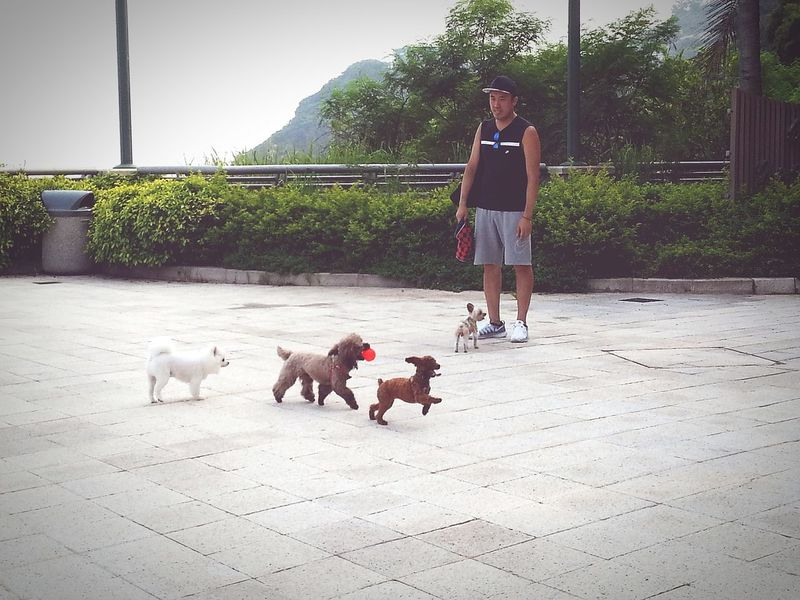 My Best Photo 2015 Summer Views Urban Lifestyle Summer Dogs The Street Photographer - 2015 EyeEm Awards The Great Outdoors - 2015 EyeEm Awards Stanley, Hong Kong 2015 Life In Hong Kong Capturing Freedom Open Edit Hong Kong Photography In Motion Up Close Street Photography Telling Stories Differently Colour Of Life capturing motion Snap A Stranger