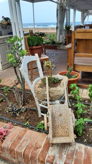 Potted plants on chair in yard against building